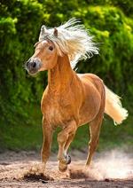Пазлы Castorland Лошадь