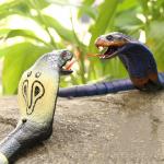 Королевская кобра на радиоуправлении со встроенным аккумулятором